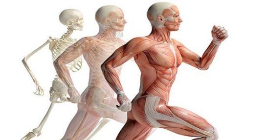 Movimento articolare e posturologia